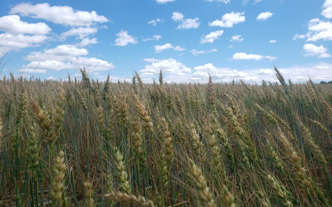 Notes from the Grain Growers Conference